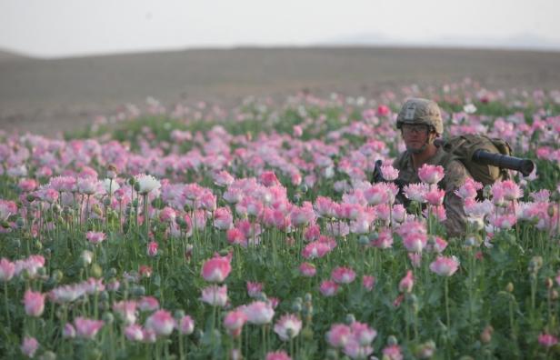 opium-fields-7.jpg